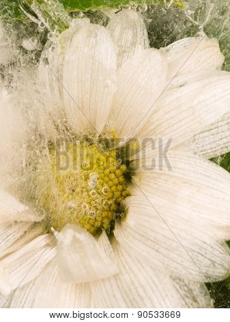 Vertical Abstraction Of Daisy Flower