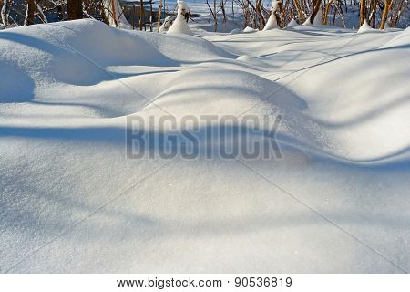 Texture Of White Snow With Shadows Of Trees