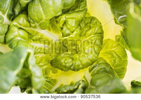 Pok Choi Cabbage, Top View, Macro ,selective Focus