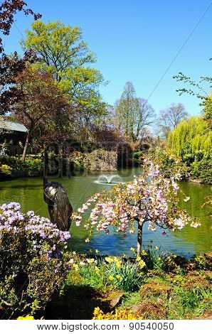Pond in the Dingle, Shrewsbury.