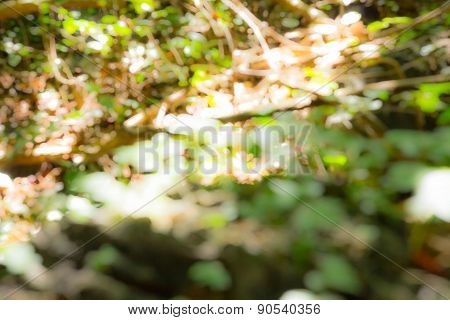 Forest Out Bokeh Blur Background