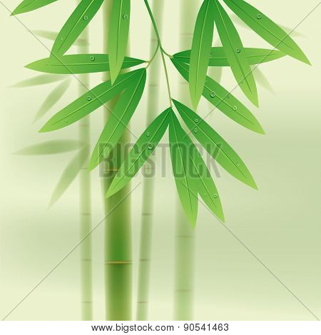 Bamboo stems and leaves on light green background. Vector illustration
