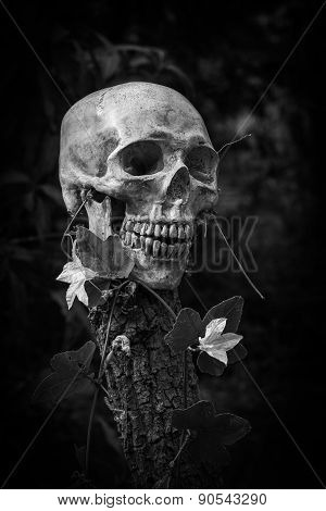 Skull And Nature