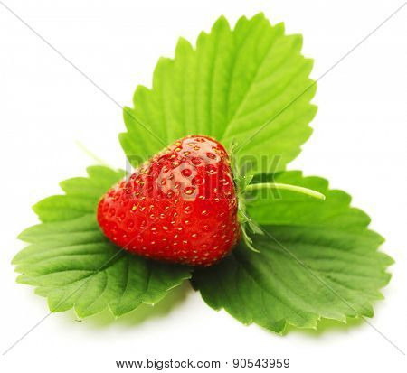 One strawberry with leaves isolated on white background