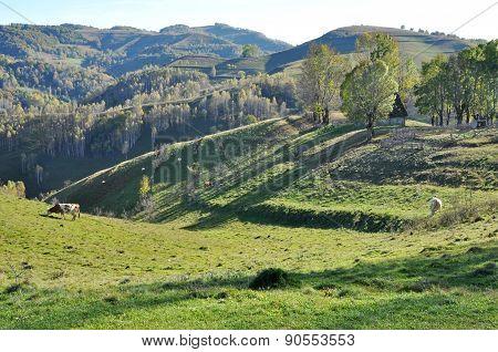 Green Vibrant Pasture In Transylvania, Romania