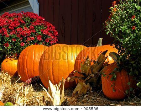 Pumpkins Harvest Time