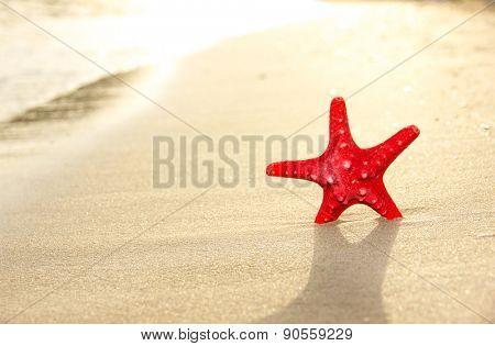 Macro photo of sea star on sandy beach with sun shine