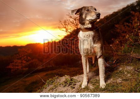 Funny Mixed Breed Gray Dog