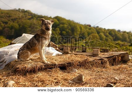 Mixed Breed Dog Sits Outdoor on Mountain