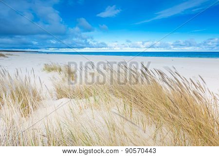 Beautiful Sea Shore With Wild Grass And Shore Plants