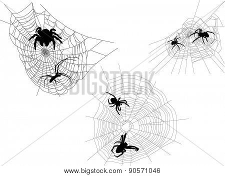 illustration with three webs with spiders isolated on white background