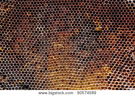 Image Of A Honeycomb In Close-up