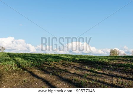 Countryside Fields In Early Spring