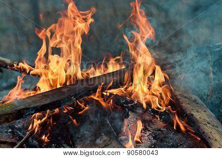 Planks Burning In Bonfire