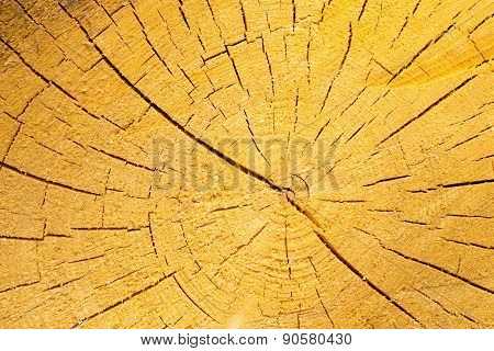 Background Of Sliced Tree Trunk
