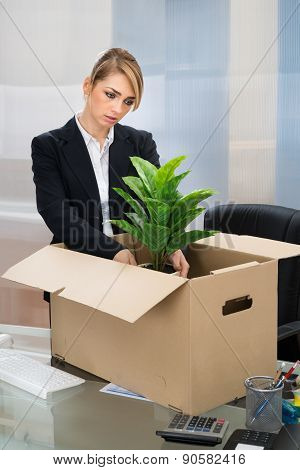 Businesswoman Packing Belongings In Box