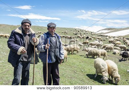 Akhalkalaki, Georgia - May 07, 2015: Shepherds and flock of sheep in mountain pastures
