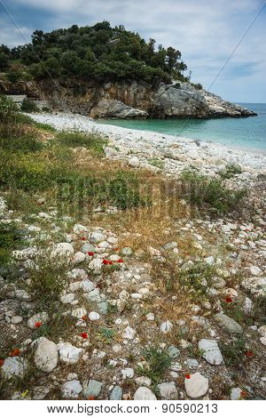 Picturesque Sea Landscape With Flowers In The Foreground, Pelion, Greece