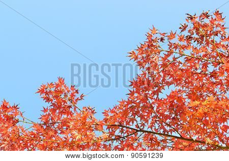 Autumn Background Over Blue Sky