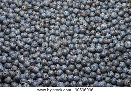 Organic Florida blueberries fresh farm picked natural healthy fruit produce background macro