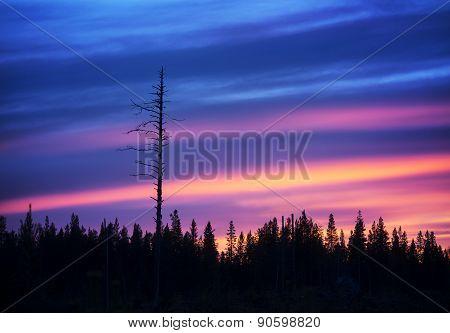 Dry Tree At Sunset