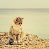 stock photo of homeless  - Sad homeless cat sitting on the beach - JPG