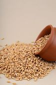 stock photo of pot gold  - Wheat grains in clay pot with scattered wheat - JPG