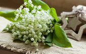 picture of lilly  - Beautiful blooming flowers lilly of the valley on rustic textile background - JPG