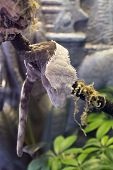 foto of terrarium  - Pet crested gecko rests on a branch in terrarium after a climb - JPG