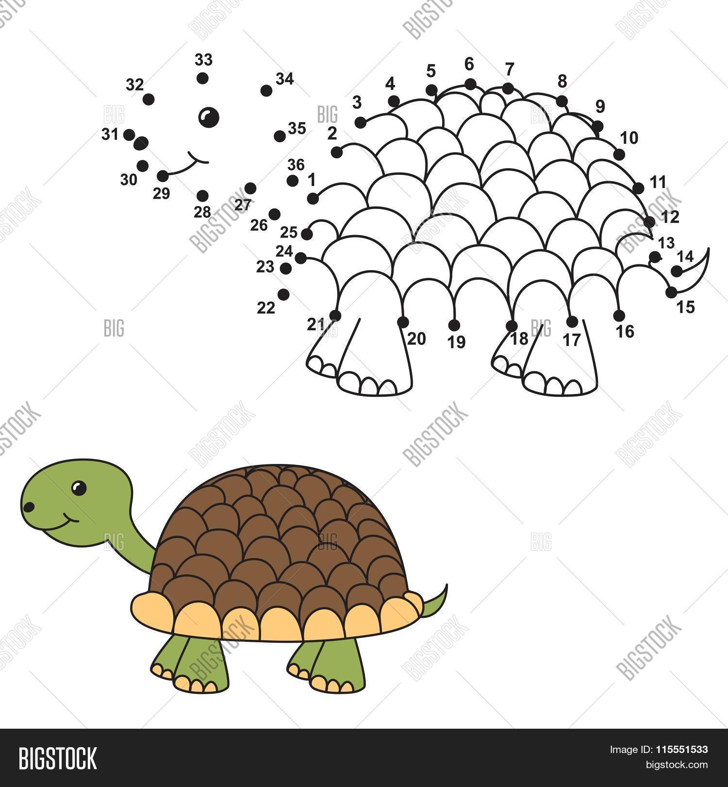 connect dots draw cute turtle vector u0026 photo bigstock