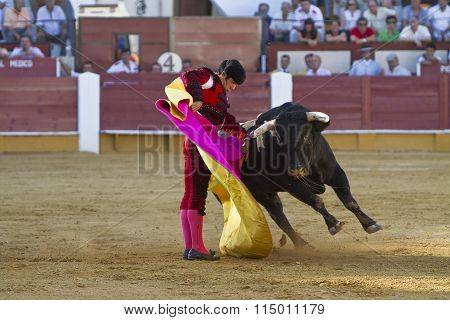 The Spanish Bullfighter Salvador Vega bullfighting with the crutch in the Bullring of the Cabra Cord