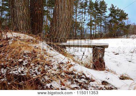 Interesting Bench At Trees On A Winter Glade