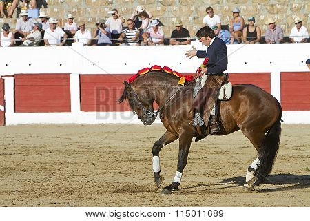Diego Ventura bullfighter on horseback spanish shouting to the Bull as the identity of courage, Lina