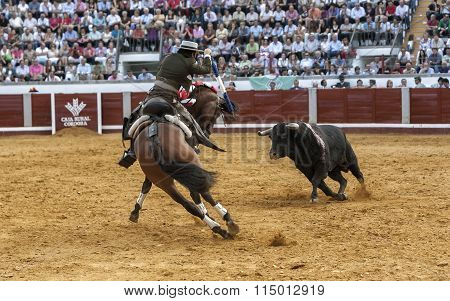 Spanish bullfighter on horseback Diego Ventura bullfighting on horseback try to put banderillas doin