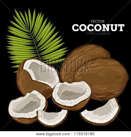 Coconut Isolated, Vector.