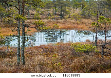 Kemeri swamp landscape in Latvia