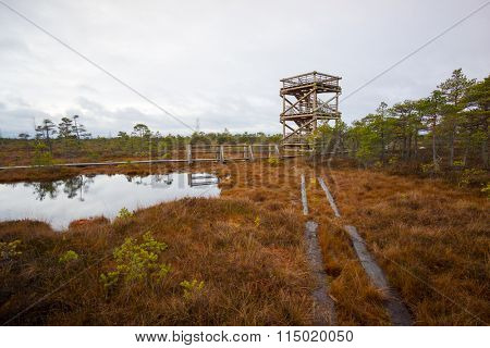 Observation tower in Kemeri swamp landscape in Latvia
