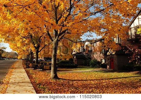 residential district in autumn color