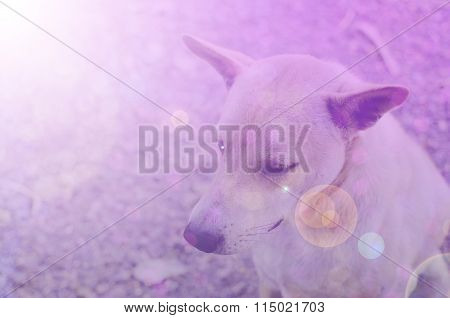 Dog In Sweet Soft Color And Blur Style