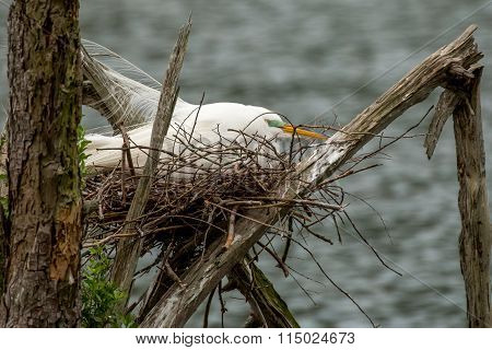 Egret nesting over the water