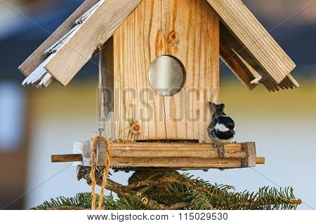 A small passerine bird, Coal tit (Periparus ater) eating hemp seeds on the wooden bird feeder in the winter in Austria