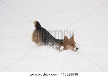play in snow