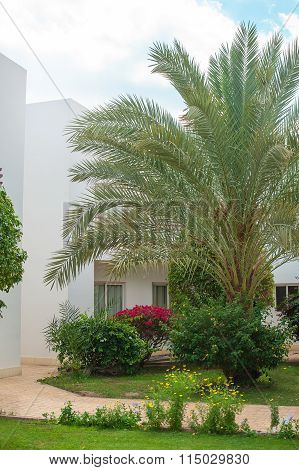 Egypt, Sharm el-Sheikh on 14 March 2014 Hotel Xperience Kiroseiz Parkland 5: Palm Trees In A Garden
