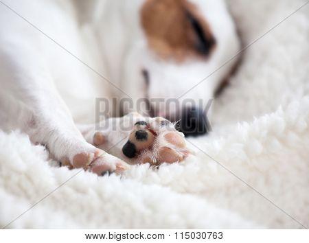 Dog sleeping on a soft white blanket