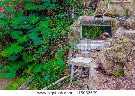 Tank Of Goldfish In Wasted Backyard