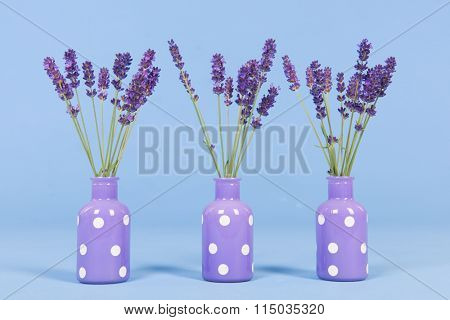 French lavender in purple vases on blue background