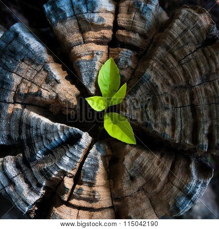 Green seedling growing from tree stump