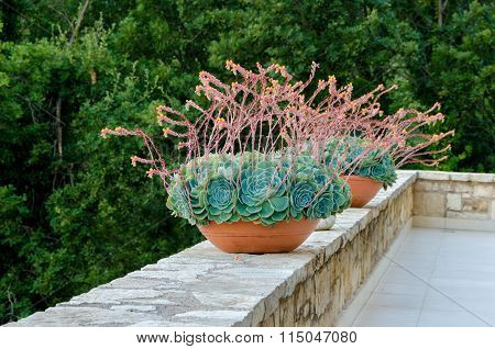 Decorative Flower Tubs