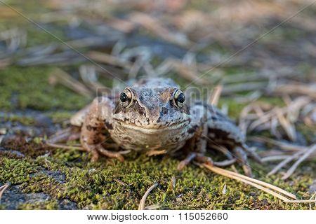 Portrait Of Toad Closeup