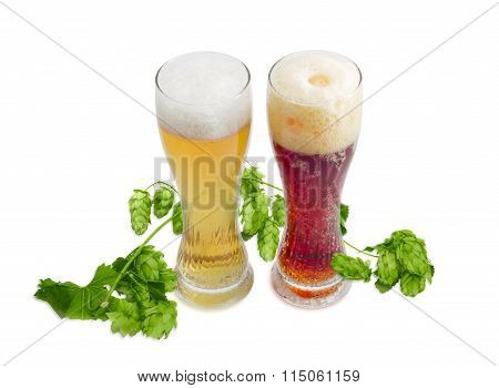 Two Beer Glass Of Various Beer And Branch Of Hops